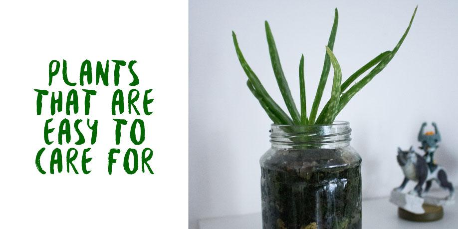 Plants-GRAPHIC.jpg